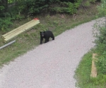 Bear checking out sugarhouse