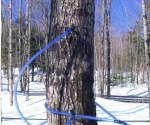 tubing_connectedtotree